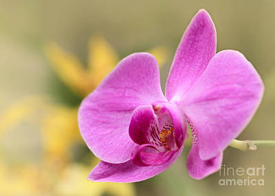 Wet Orchids Photograph - Pretty Pink Phalenopsis Orchid by Sabrina L Ryan