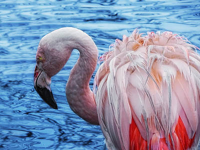 Water Bird Photograph - Pretty Plumage by Joachim G Pinkawa