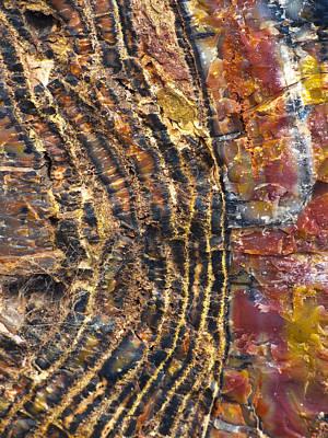 Petrified Forest Arizona Photograph - Prime Cut 1 by Skip Hunt
