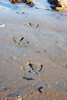 Maine Photograph - Prints In The Sand by Amanda  Russell
