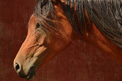 Profile Of A Horse. Original by Toppart Sweden