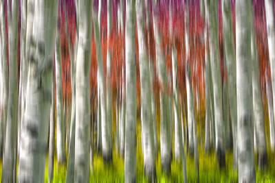 Forest Photograph - Progression Of Autumn by Adam Romanowicz