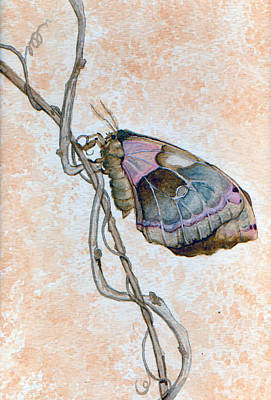 Promethea Moth Print by Katherine Miller