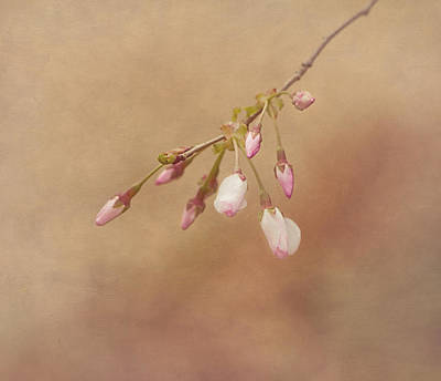 Promise Of Spring Print by Kim Hojnacki