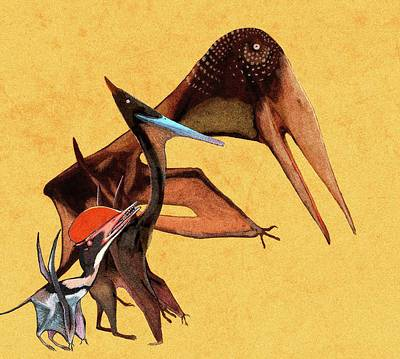 Extinct Reptile Photograph - Pterosaur Size Comparison by Nemo Ramjet
