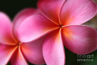 Pua Lei Aloha Cherished Blossom Pink Tropical Plumeria Hina Ma Lai Lena O Hawaii Print by Sharon Mau