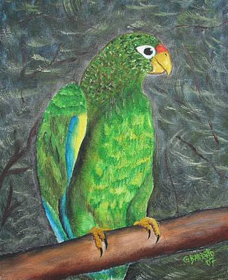 Puerto Rican Parrot Print by Gloria E Barreto-Rodriguez