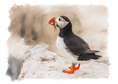Puffin Digital Art - Puffin by Tanya Hall