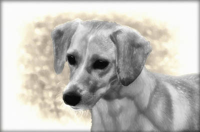 Beagle Digital Art - Puggles by Bill Cannon