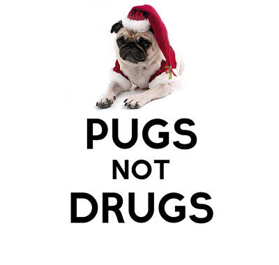 Purebred Painting - Pugs Not Drugs by Celestial Images