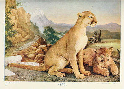 Cats. Victorian Painting - Pumas by Philip Ralley
