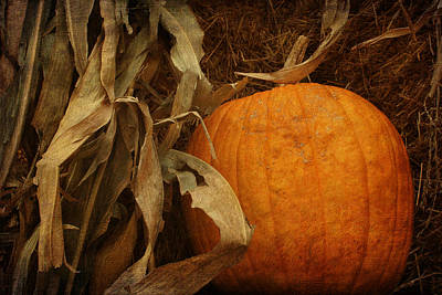 Outdoor Still Life Photograph - Pumpkin And Cornstalks by Nikolyn McDonald