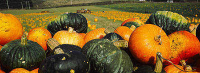 Ripe Photograph - Pumpkin Field, Half Moon Bay by Panoramic Images