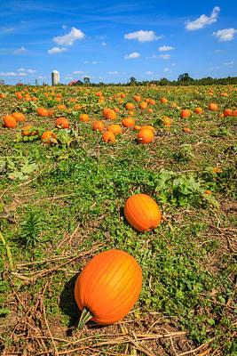 Kentucky Photograph - Pumpkin Patch by Alexey Stiop
