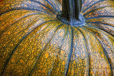 Agriculture Photograph - Pumpkin Pumpkin by James BO  Insogna