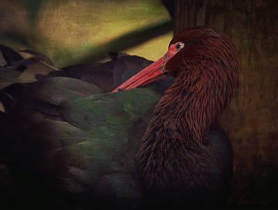 Ibis Digital Art - Puna Ibis by Maria Angelica Maira