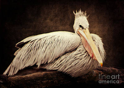 Pelican Mixed Media - Punky by Angela Doelling AD DESIGN Photo and PhotoArt