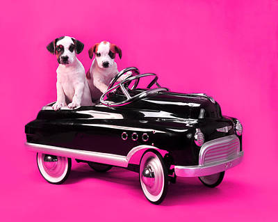 Puppies In Pedal Car On Hot Pink Print by Rebecca Brittain