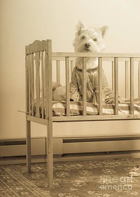 Puppy Dog In A Baby Crib Print by Edward Fielding