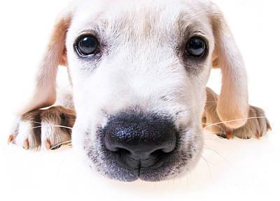 Puppy Face Print by Diane Diederich