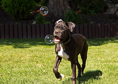 Puppy Playing With Bubbles Print by Stephanie McDowell