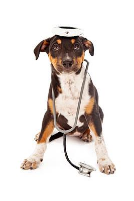 Puppy Veterinarian Print by Susan  Schmitz