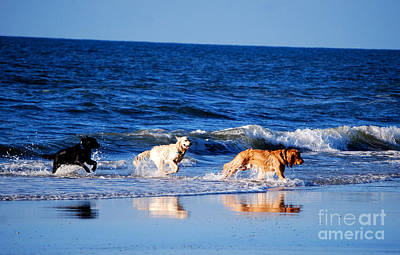 Pups On The Beach Print by Linda Mesibov