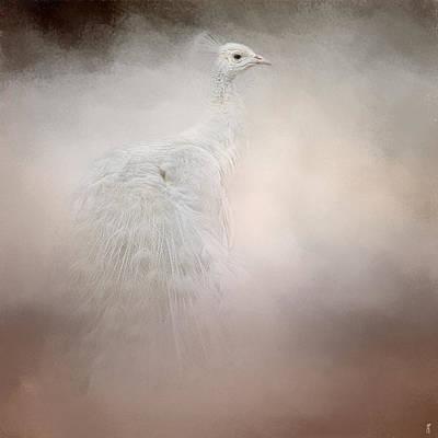 Peacock Photograph - Purity - White Peacock - Wildlife  by Jai Johnson