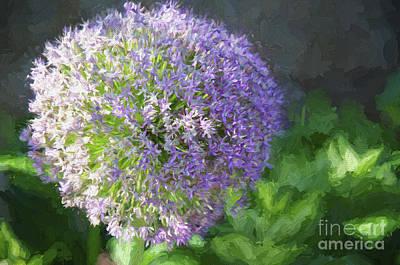 Allium Hollandicum Photograph - Purple Allium 1 Hollandicum Sensation  by Andee Design