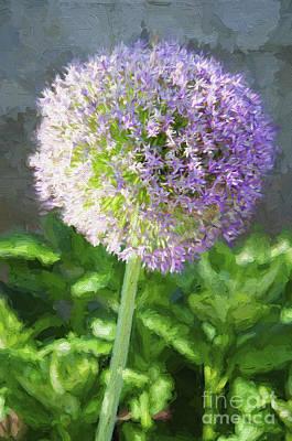 Allium Hollandicum Photograph - Purple Allium 3 Hollandicum Sensation  by Andee Design