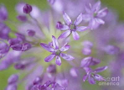 Allium Hollandicum Photograph - Purple Allium Flower by Juli Scalzi