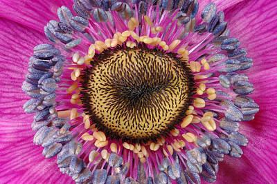 Anemone Photograph - Purple Anemone by Russ Greene