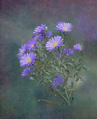 Purple Asters Print by Angie Vogel