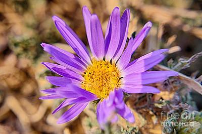 Purple Bloom Print by Jeremy Linot