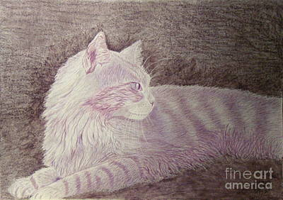 Purple Cat Original by Cybele Chaves