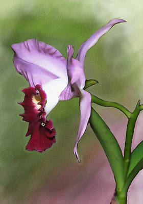Purple Cattleya Orchid In Profile Print by Elaine Plesser