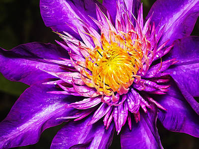 Floral Digital Art Digital Art Digital Art - Purple Clematis Flower by Bill Caldwell -        ABeautifulSky Photography