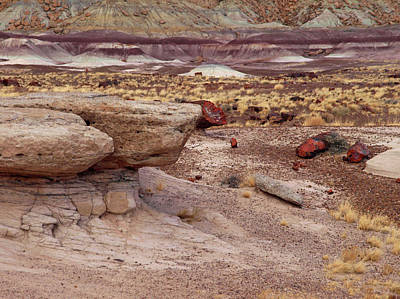 Peterson Nature Photograph - Purple Earth by James Peterson