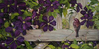 Clematis Painting - Purple Finch And Clematis by Doris Pavelich