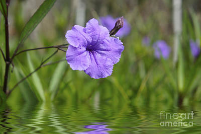Violet Photograph - Purple Flower by Aged Pixel