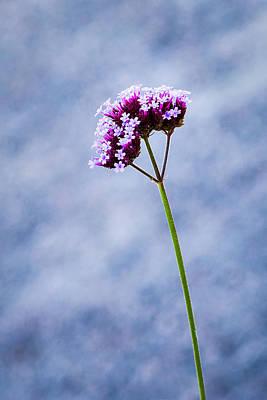 Purple Flower Print by Alexander Senin