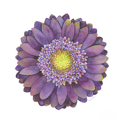 Gerbera Painting - Purple Gerbera Daisy by Amy Kirkpatrick