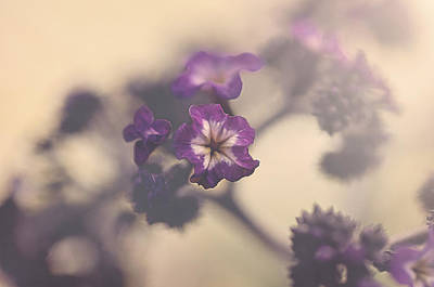 Photograph - Purple Haze by Faith Simbeck