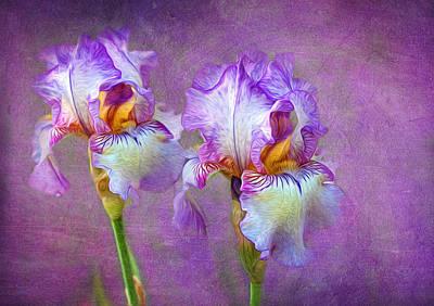 Purple Iris Print by Lena Auxier