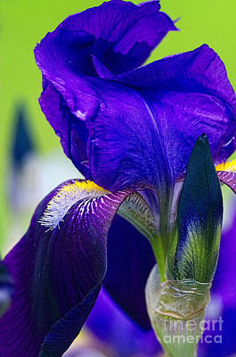 Irises Digital Art - Purple Iris Macro With Texture by Sharon Talson