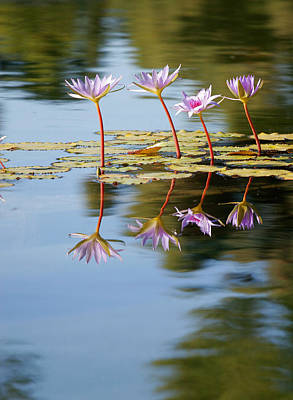 Lilly Pads Photograph - Purple Lillies by Peter Tellone