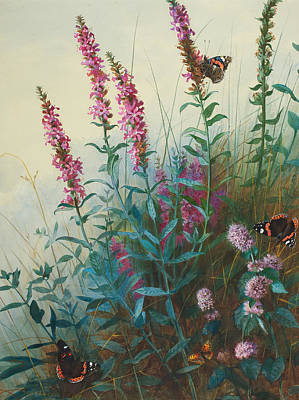 In Bloom Painting - Purple Loosestrife And Watermind by Archibald Thorburn
