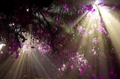 Orbs Photograph - Purple Magic by Nadya Ost
