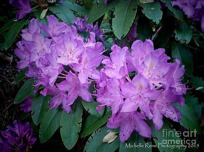 Purple Majesty Print by Michelle Rene Goodhew