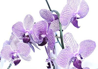 Wrap Digital Art - Purple Orchids by Marsha Heiken